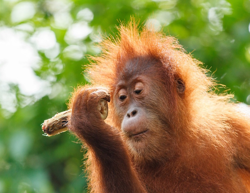 Unilever implements 'radical step' on palm oil traceability